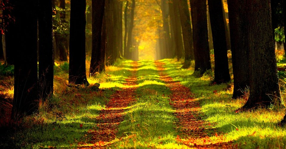 Forêt - Photo : PixaBay