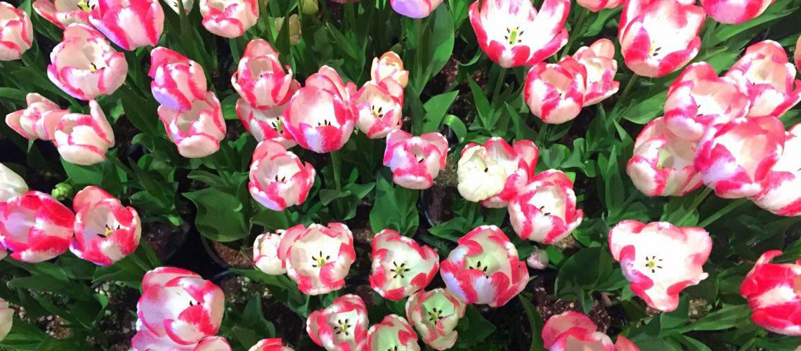 Les fleurs du jardin du Bellagio, à Las Vegas (2016)