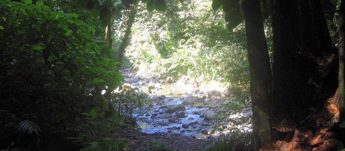 La cascade aux écrevisses, Basse-Terre, Guadeloupe