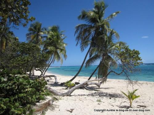 Guadeloupe plage MArie Galante plus belle
