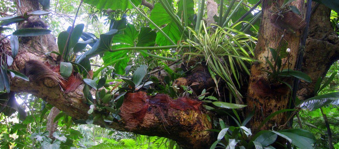 La végétation luxuriante de Basse-Terre, en Guadeloupe