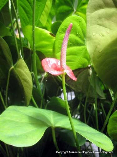 Guadeloupe fleur parc mamelles