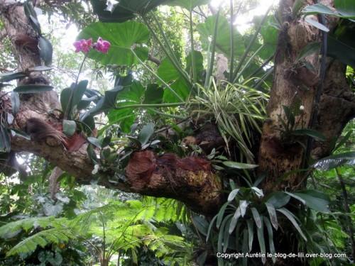Guadeloupe d couverte de l 39 le de la basse terre le - Jardin botanique guadeloupe basse terre ...