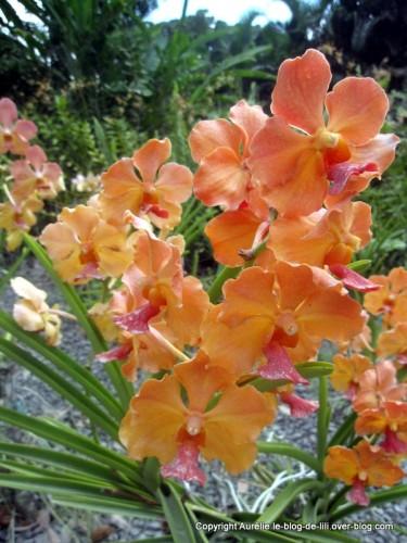Guadeloupe jardin deshaies