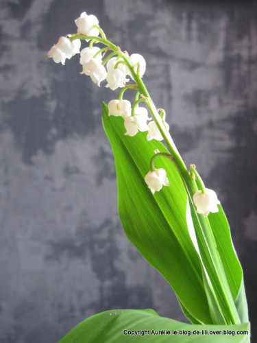 au 1er mai c 39 est muguet le blog de lili. Black Bedroom Furniture Sets. Home Design Ideas