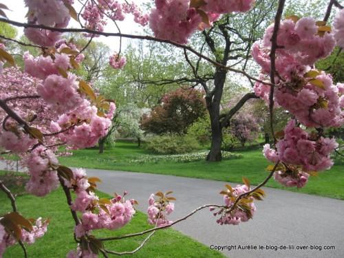 NYC cadre fleurs roses