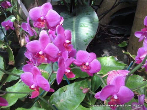 botanical-garden-NYC.jpg