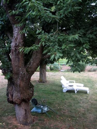 Transat-dans-le-jardin-repos.JPG