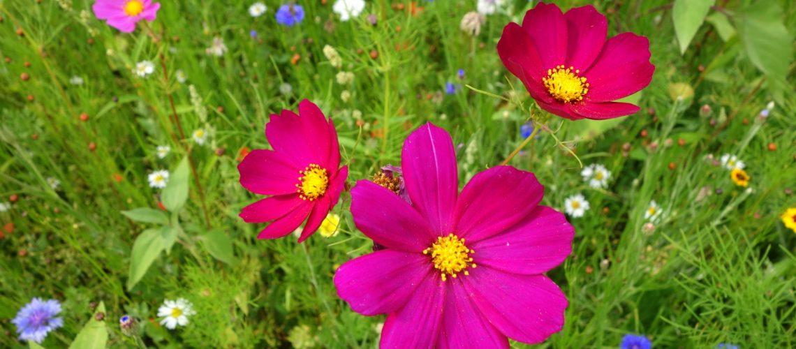 Fleurs des jardins de Brocéliande en Bretagne