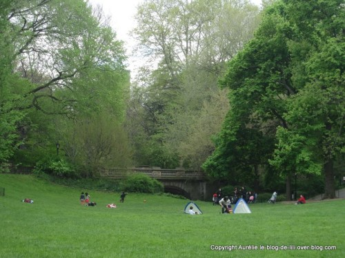 Pelouse-central-park.jpg