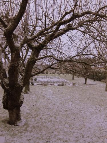 jardin-24-decembre-sous-la-neige.JPG