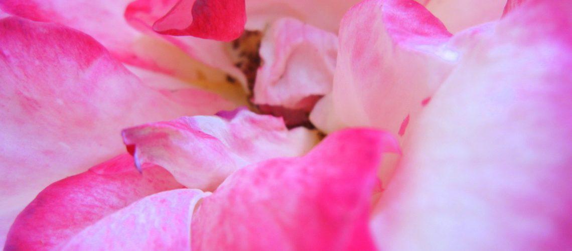 Fleur du jardin des parents de Lili