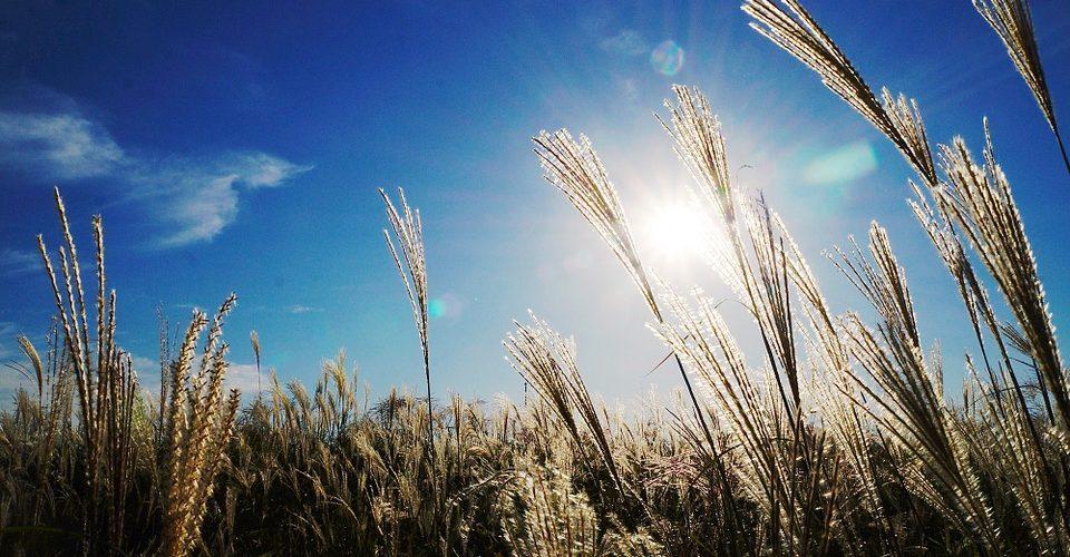 Besoin de soleil - Photo : PixaBay
