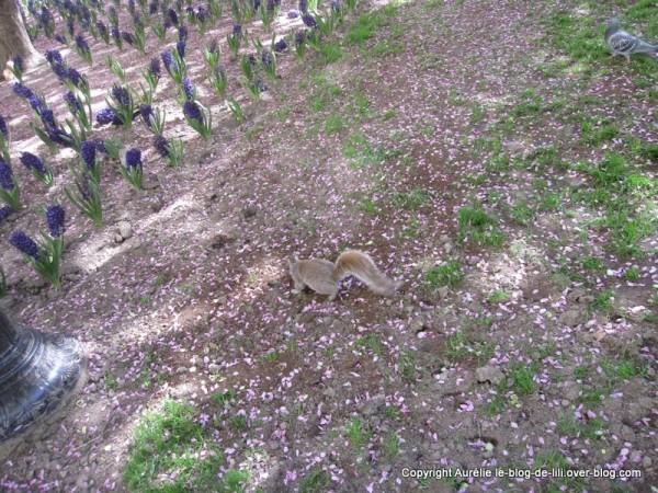 Madison square park 11 écureuil