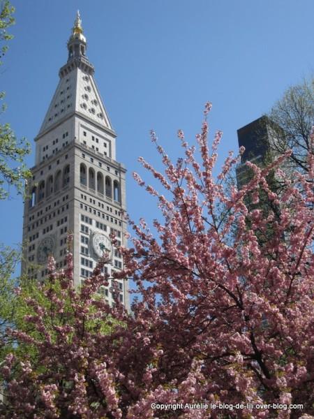 Madison-square-park--2-New-York.jpg