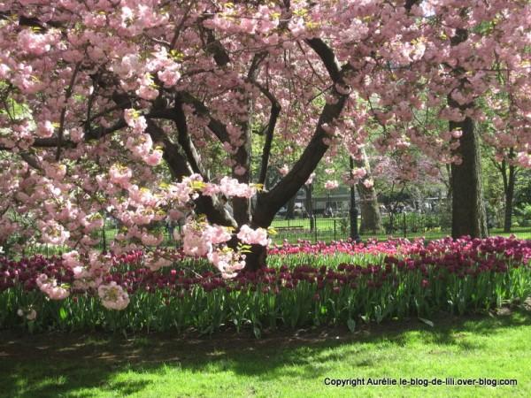 Madison square park 7 fleurs