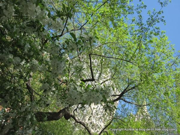 Madison square park 8 tree