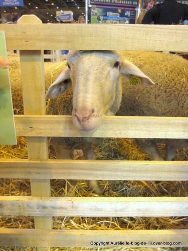 salon agriculture 1 mouton