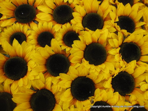 salon-agriculture-24-tournesol.JPG