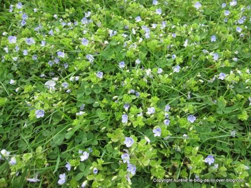 Parc-floral-printemps-1.JPG