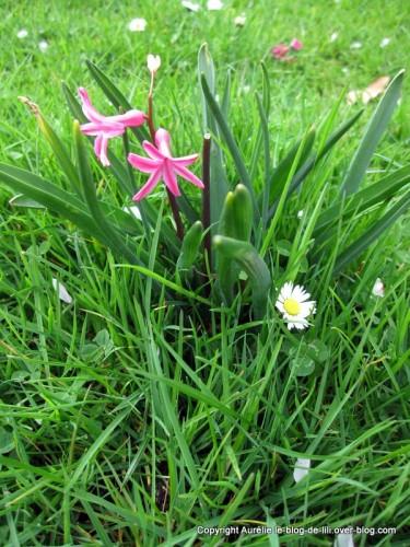 Parc-floral-printemps-2.JPG