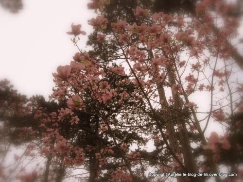 Parc-floral-printemps-3.JPG