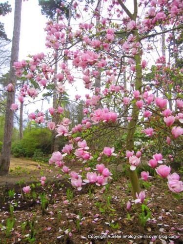 Parc-floral-printemps-4.JPG