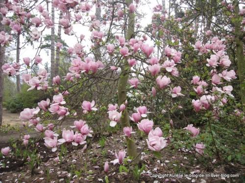 Parc-floral-printemps-5.JPG