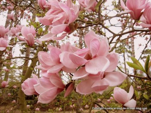 Parc-floral-printemps-6.JPG