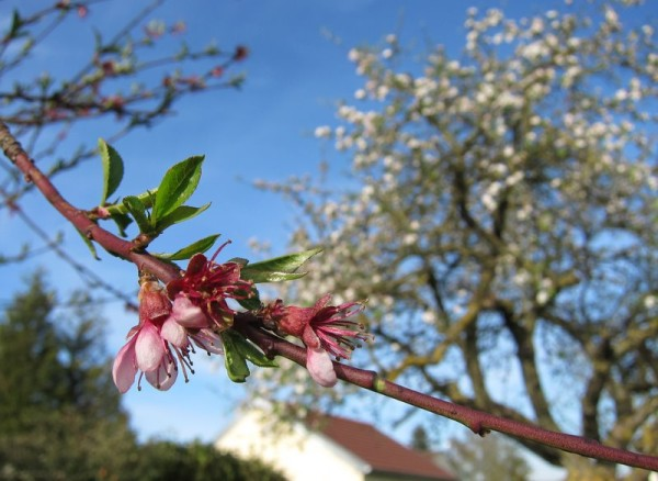 arbres-jardin-avril.JPG
