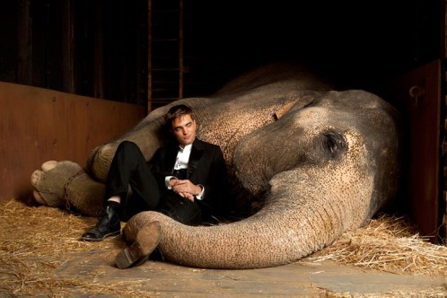 eau-pour-les-elephants-robert-pattinson-elephant.jpg