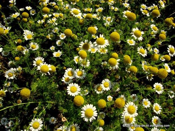 Promenade au jardin des plantes paris 5e le blog de lili for Au jardin des plantes