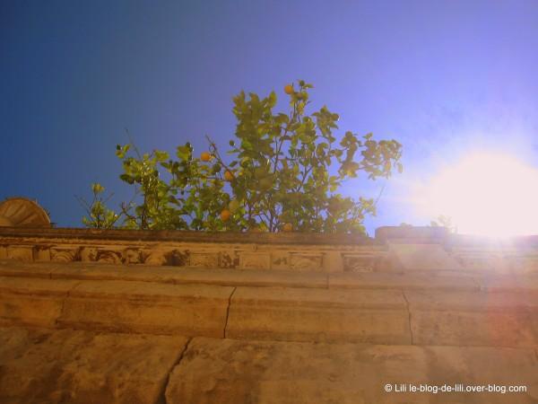 Sicile Syracuse 22