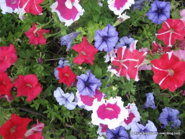 Sicile-Taormine-29-fleurs.JPG