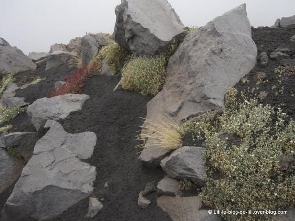 Sicile rando Etna 11