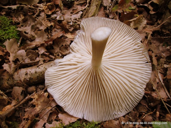 cueillette-champignons-1.JPG