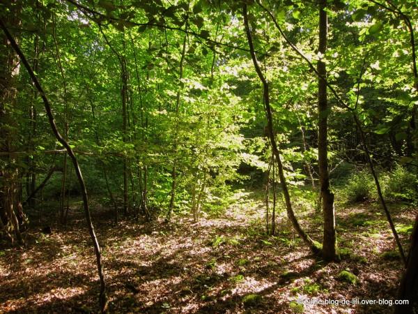 promenade dans les bois la cueillette aux champignons le blog de lili. Black Bedroom Furniture Sets. Home Design Ideas