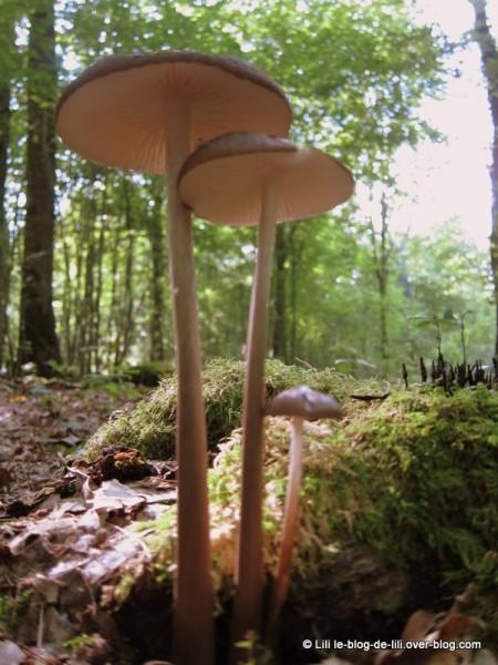 cueillette-champignons-5.JPG