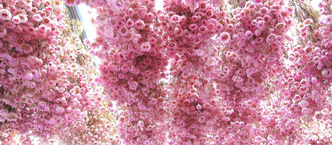 Le marché aux fleurs d'Amsterdam