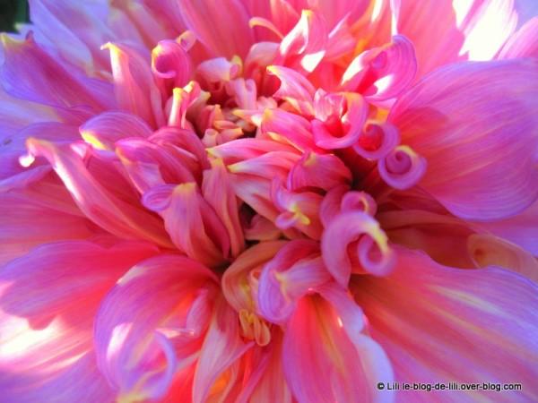Parc-floral-octobre-1.JPG