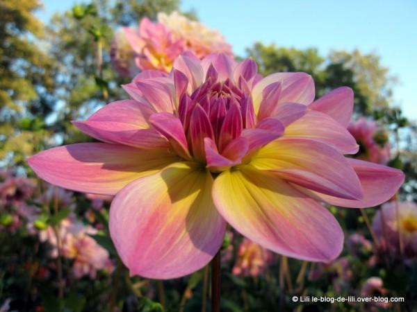 Parc-floral-octobre-2.JPG