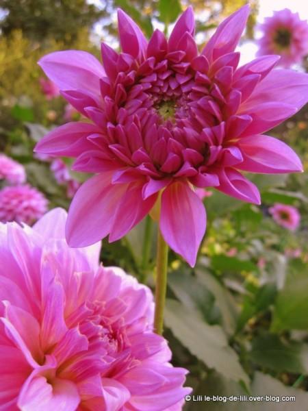 Parc-floral-octobre-5.JPG