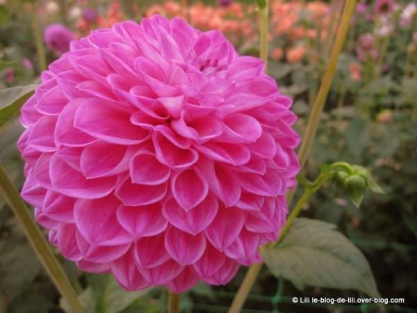 Parc-floral-octobre-7.JPG