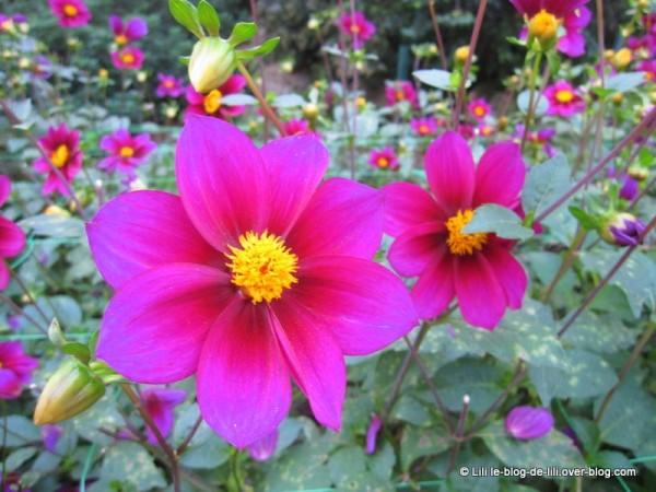 Parc-floral-octobre-8.JPG