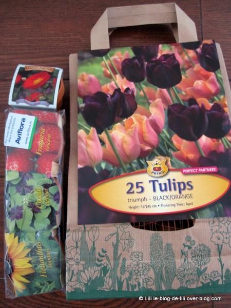 cadeaux-amsterdam-bulbes-tulipes.JPG