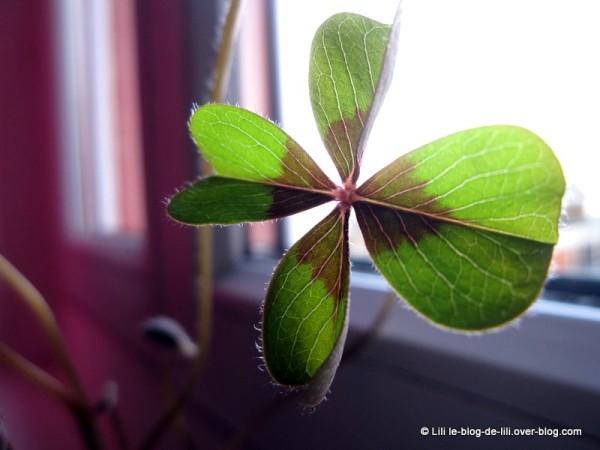 trefle-4-feuilles.JPG