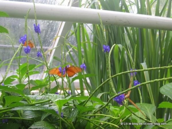 Amsterdam-jardin-botanique-5.JPG