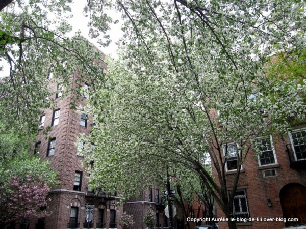Greenwich-village-NYC-2.jpg