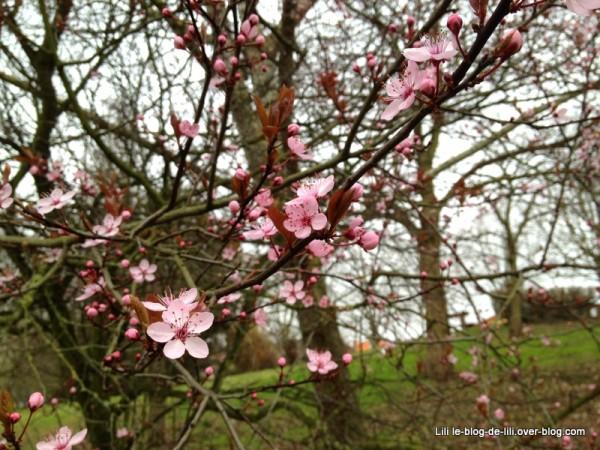 fleurs-roses-mars-2012.JPG