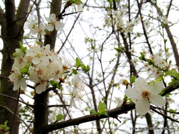 Projet-52-2012-semaine-10-arbre-en-fleurs-sur-la-coulee-ve.JPG
